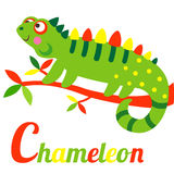 Chameleon. Cute animal alphabet. C letter. Cute cartoon Chameleon. Alphabet design in a colorful style Royalty Free Stock Photo