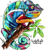 Chameleon drawing. Rainbow chameleon sitting on a branch watercolor painting vector illustration