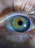 Chameleon eyes Stock Images