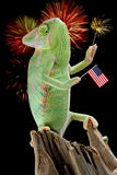 Chameleon Fireworks. A veiled chameleon is holding a flag and a sparkler while fireworks are on display Royalty Free Stock Photos