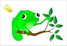 Chameleon. Funny green Chameleon sitting on a tree branch Stock Images