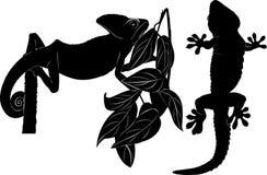 Chameleon gecko Stock Images