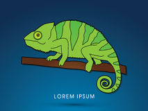 Chameleon graphic vector. Stock Images