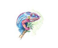 Chameleon. Hand drawing colored chameleon. Illustration Stock Photo