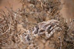 Chameleon hiding in bush Stock Photo