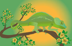 Chameleon. An illustration of a chameleon Stock Image