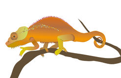 Chameleon. An illustration of a chameleon Stock Images