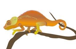 Chameleon Stock Images