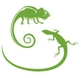 Сhameleon & Lizard Royalty Free Stock Photos
