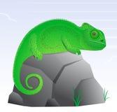 Chameleon lizard cartoon Stock Photos
