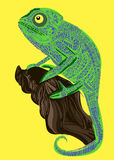 Chameleon lizard drawing color graphics details Royalty Free Stock Image