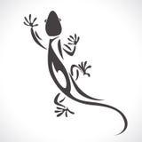 Chameleon lizard Stock Image