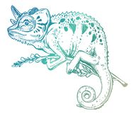 Chameleon lizard on a tree branch. Hand drawn sketch of a tropical reptile. vector illustration