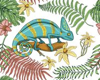 Chameleon Lizard, tropical flowers, seamless pattern. American green reptile or snake, herbivorous. vector illustration. For book or pet store, zoo. engraved Stock Image