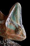 Chameleon on log Royalty Free Stock Image