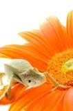 Chameleon na flor fotos de stock royalty free