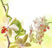 Chameleon and orchid Stock Images