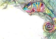Chameleon Royalty Free Stock Images