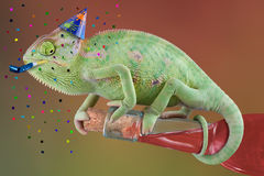 Chameleon Pary Time. A veiled chameleon is trying to open a bottle of wine at a party Stock Photos