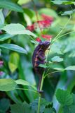 Chameleon. This photo shows a colorful chameleon sitting on a small branch Royalty Free Stock Images
