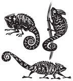 Chameleon preto e branco Imagens de Stock Royalty Free