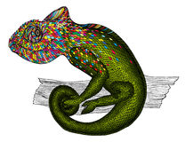 Chameleon.  Profile Lizard. rainbow color Royalty Free Stock Photos
