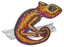 Chameleon. Profile Lizard. rainbow color Stock Photography