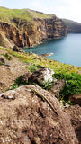 Chameleon. On rock, Madeira, Portugal stock photo