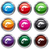 Chameleon set 9 collection. Chameleon set icon isolated on white. 9 icon collection vector illustration Royalty Free Stock Photos