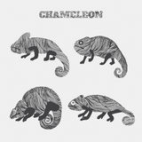 Chameleon set collection. Stickers, posters, background. Can be used for wallpapers, pattern fills, web page backgrounds,surface t Royalty Free Stock Photography