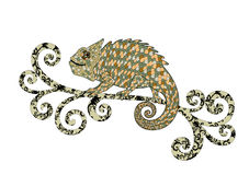 Chameleon with shades of brown scales Stock Image