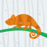 Chameleon sitting on a branch Stock Images