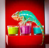 Chameleon sitting on the candles Royalty Free Stock Images