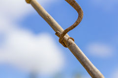 Chameleon tail tied on a branch in a blue sky background Stock Photo