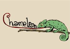 Chameleon with text Royalty Free Stock Photography