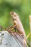 Chameleon in the top of column Stock Photo