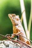 Chameleon in the top of column Royalty Free Stock Image