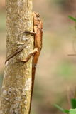 Chameleon on tree at warming day Stock Photo