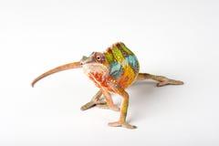 Chameleon. On a white background Stock Photos