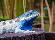 Chameleons statue Stock Image