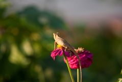 Chameloan自然迷离背景 库存照片