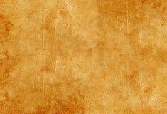 Chamois beige Photographie stock