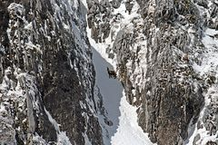 Chamois gorge. A chamois is walking in a gorge on the mount meta in abruzzo national park in italy Stock Photo