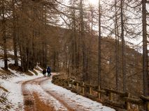 Couple walks through forest in snow stock images