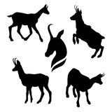 Chamois set vector. Chamois set of silhouettes vector stock illustration