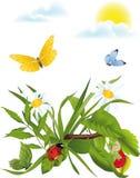 chamomile łąka Obrazy Royalty Free