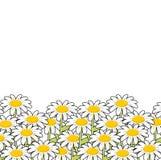 Chamomile Άσπρο θερινό λιβάδι λουλουδιών όμορφες άγρια περιοχές λουλουδιών Στοκ φωτογραφία με δικαίωμα ελεύθερης χρήσης