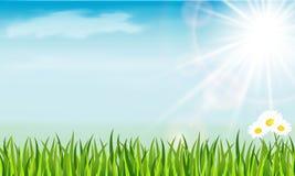 Chamomile, ήλιος και χλόη Στοκ Εικόνες