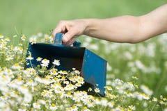 chamomile επιλογή Στοκ εικόνες με δικαίωμα ελεύθερης χρήσης