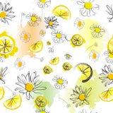 Chamomile με το σχέδιο λεμονιών Στοκ φωτογραφία με δικαίωμα ελεύθερης χρήσης